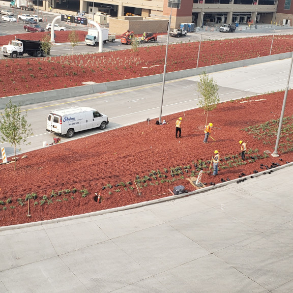 Roadway arrival planting August 2020